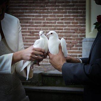 dvě holubičky