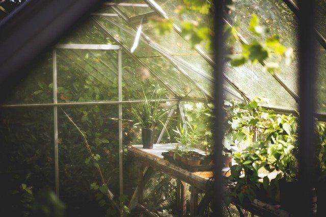 skleníkové rostliny